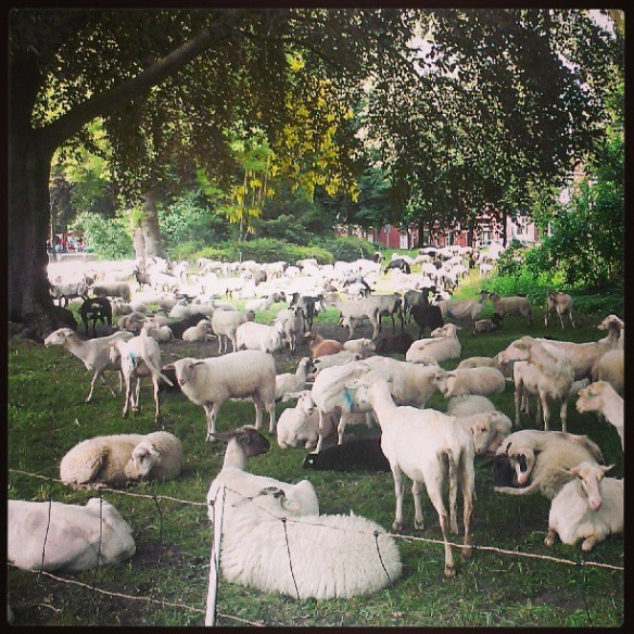 #project52 week 23 City Sheep!